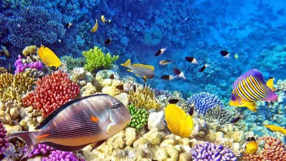 澳洲大堡礁潜水景色
