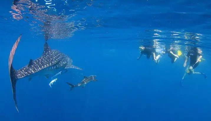 澳洲宁格鲁礁景色