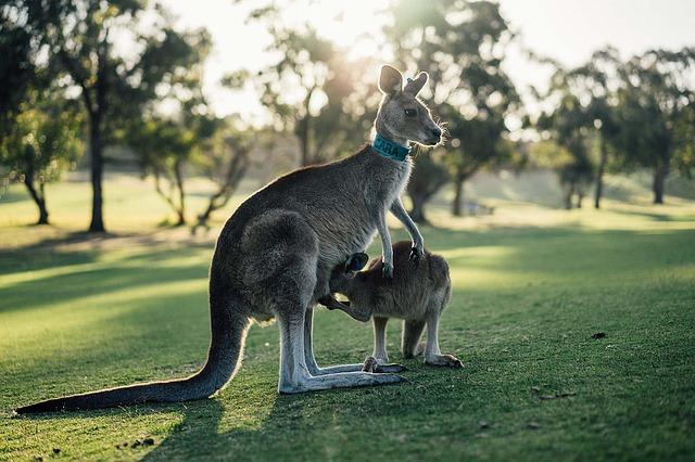 新西兰签证拒签对澳大利亚签证的影响