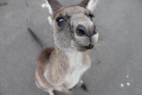 新西兰签证和澳大利亚签证申请的注意事项