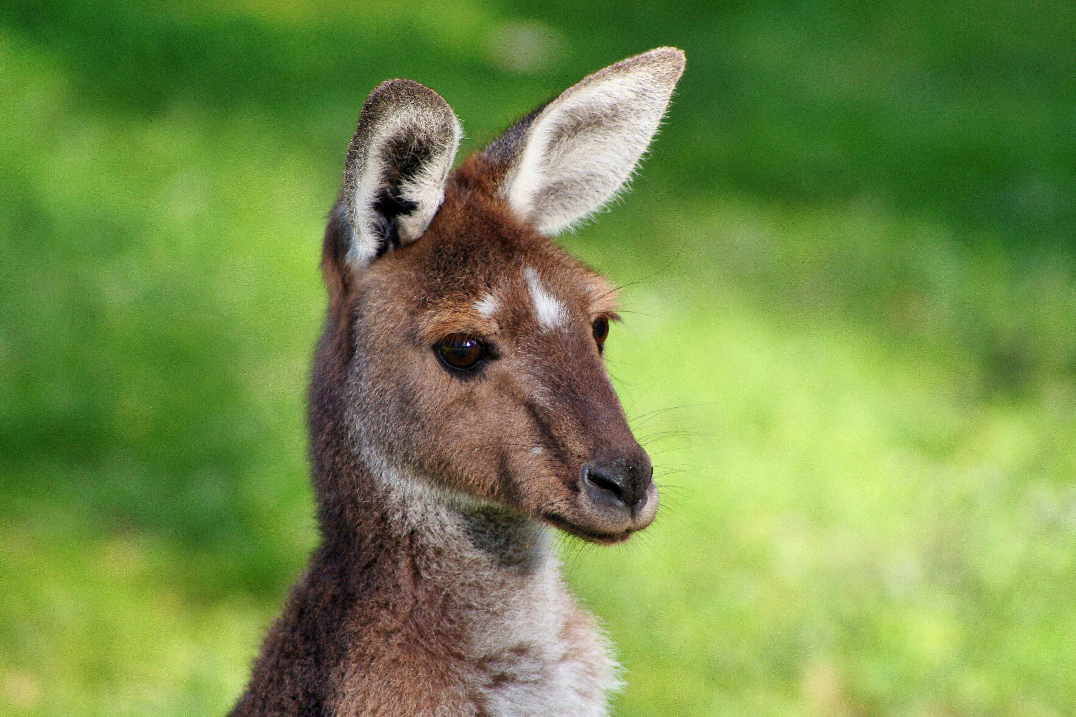 敏感地区人群如何申请澳大利亚签证