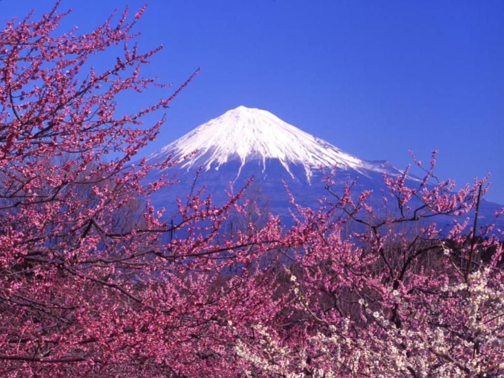 一个人前往日本游玩该如何办签证?